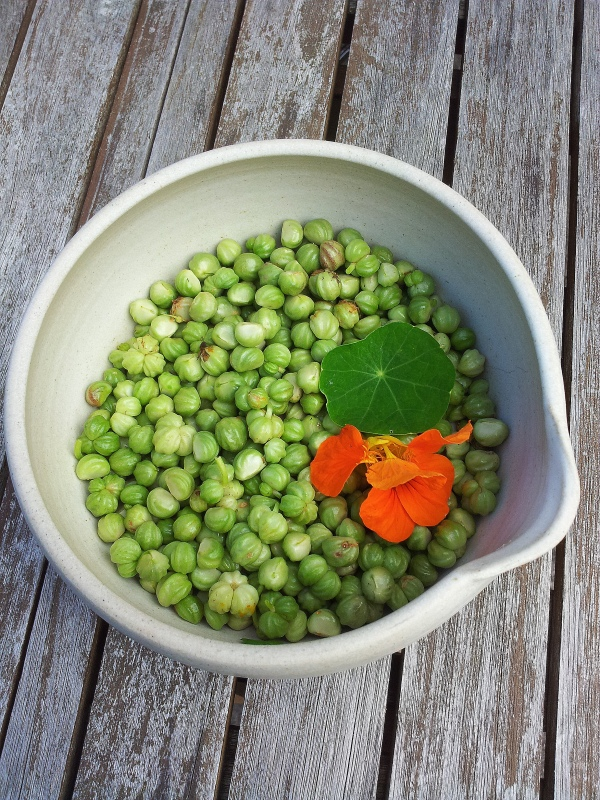 pickled nasturtiums