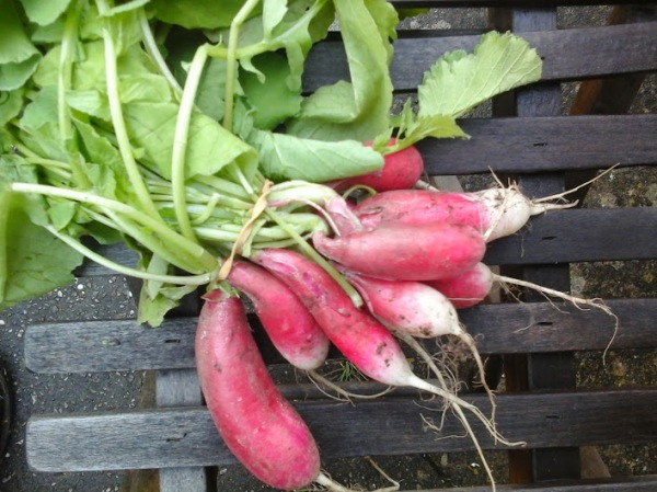 A glut of radishes meant we discovered lots of great recipes
